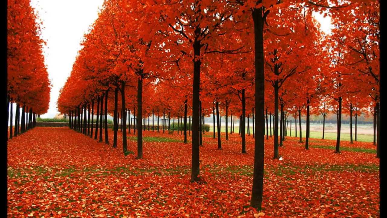 The Beautiful Colors Of Fall 2017 Most Trees Hd You