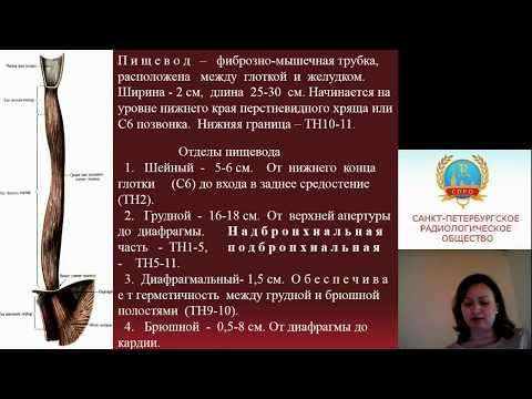 Михайловская Е.М. КТ диагностика полых органов ЖКТ