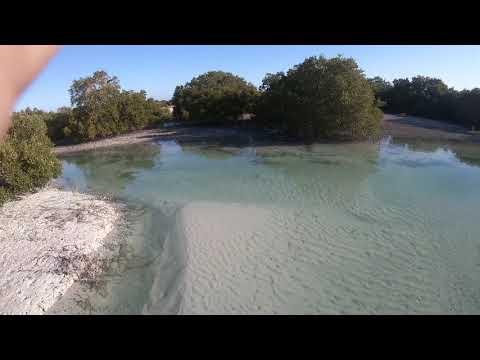 Al Jubail Mangrove Island
