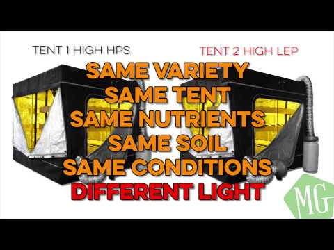 Cannabis Grow Lighting | Best Light for growing Cananbis | Cannabis Lighting Education