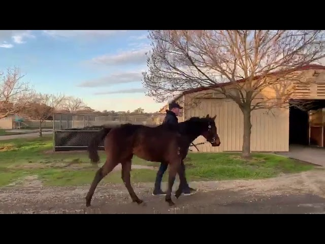 Exceed And Excel X Flash Of Innocence Filly