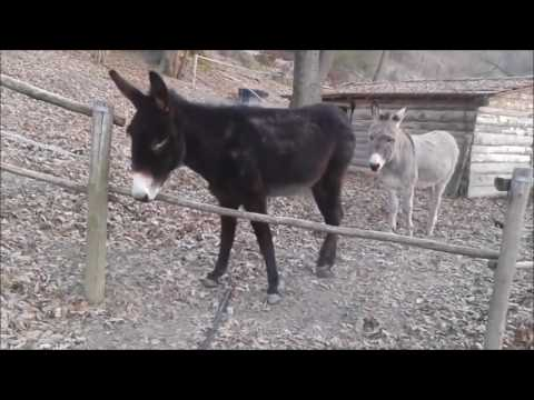 Clever Donkey Finds Smarter Way to Get to Other Side of Fence