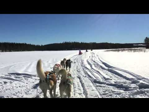 Travel movie: Gold of Lapland - Winter in Sweden