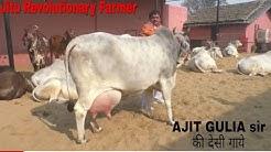 DESI COWS- Milk 20+Litre(A2Milk) -Gopalak AJIT GULIA Sir- District Jhajjhar, Haryana.