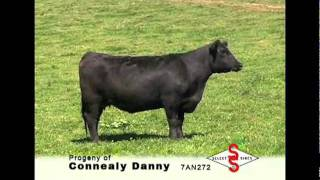 7AN272 Connealy Danny 5398
