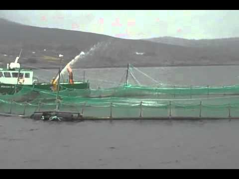 Wegmans Seafood Team's Trip to Visit Our New Irish Organic Salmon Supplier