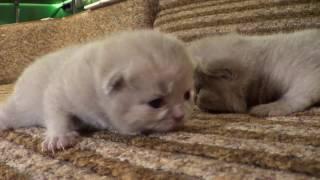 Наши котята открыли глаза
