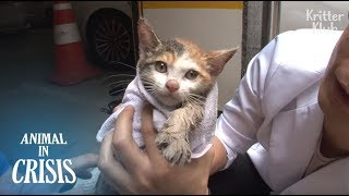 Kitten Wants To See His Mom Who Never Gave Up On Him When He Was In Despair   Animal in Crisis EP127