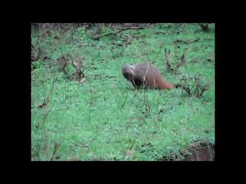 Bandipur National Park   Nilgiri Biosphere Reserve