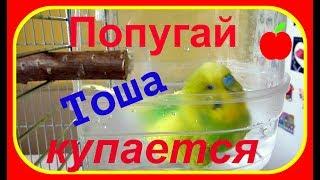 Купание попугая//Купалка для попугая//Уход за попугаем//Водные процедуры