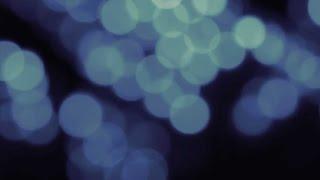 Phish: New Year