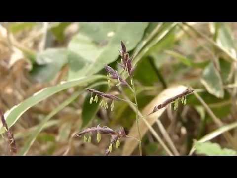 ムビる03782 笹の花 sasa
