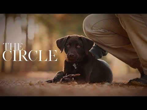 Dog Lovers, get your tissues.  The Circle - Short Film