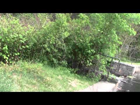 Refuges And Sanctuaries Stony Brook Norfolk MA Part 3.