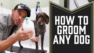 Grooming Dogs: How To Bathe Your Dog