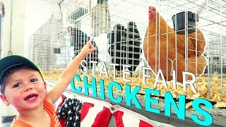 Missouri State Fair Chickens