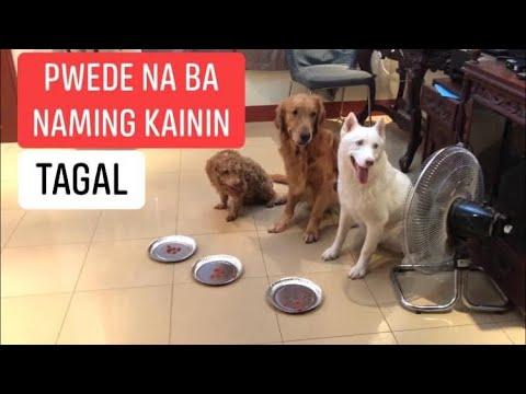 wait-for-food-challenge