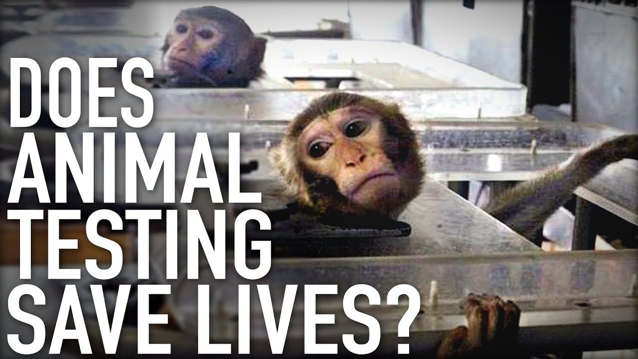 I need help with a research paper on animal testing.?