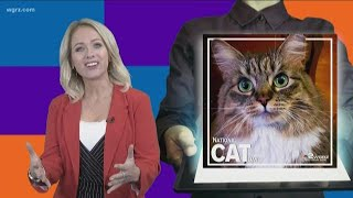Most Buffalo Stories Of The Day: National Cat Day
