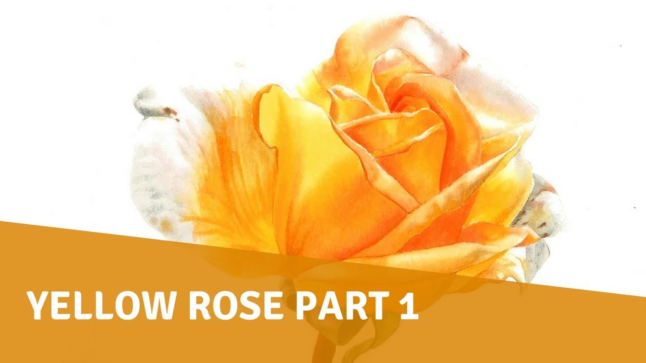 watercolor tutorial - yellow rose part 1 - youtube