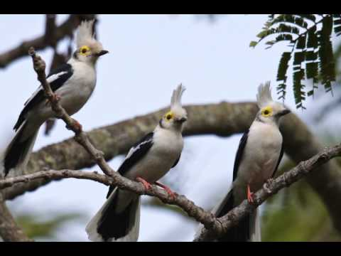 Birds of The Gambia 20150105
