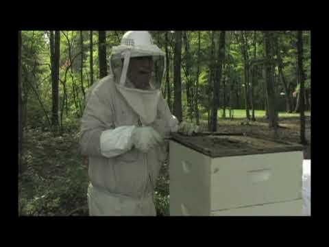 Gay beekeeping