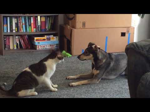 Cat and Dog Best Friends Play Fighting