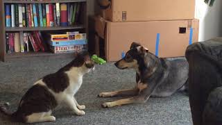 Martial Artists  Cat and Dog Spar !