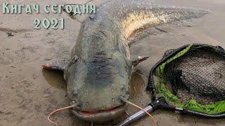 Shorts Сом атакует Catfish attacks Горячие Новости сегодня на р Кигач 21 03 21г