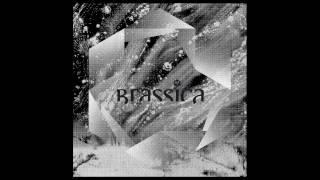 Brassica - Milieux Metrix