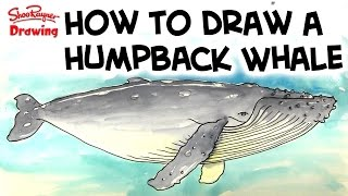 How to draw and paint a Humpback Whale