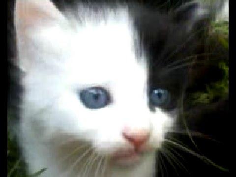 Half white half black cat