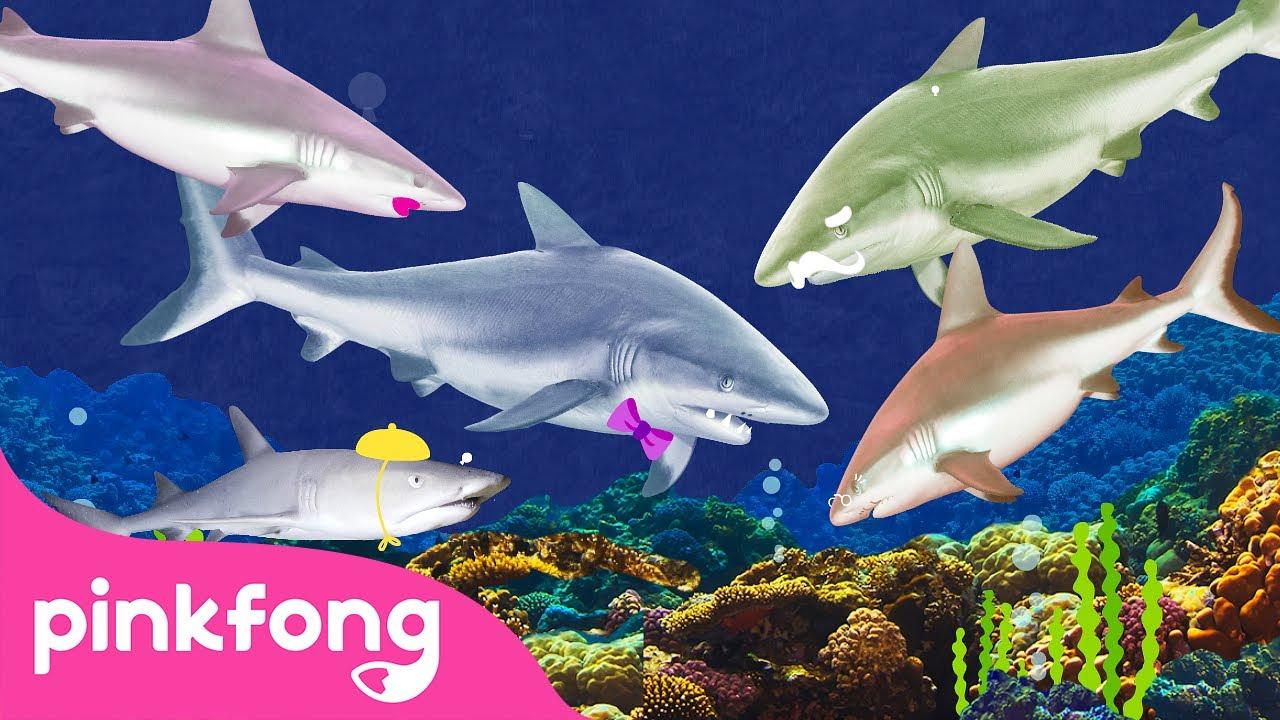🦈 Eu Sou Um Verdadeiro Bebê Tubarão | Pinkfong Canções para crianças