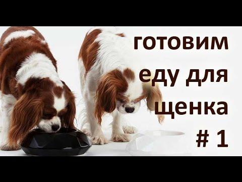 Как давать щенку тыкву