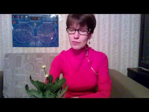 Мои комнатные растения: как заставить цвести каланхоэ