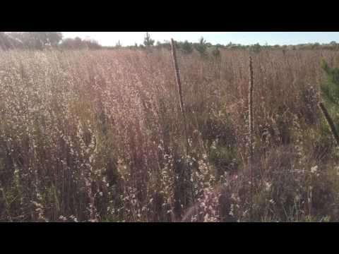 bluestem grass - November