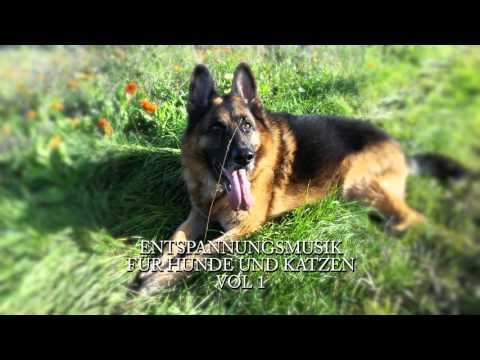 Entspannungsmusik - Tiermeditation - Für Tiere - Vol 1