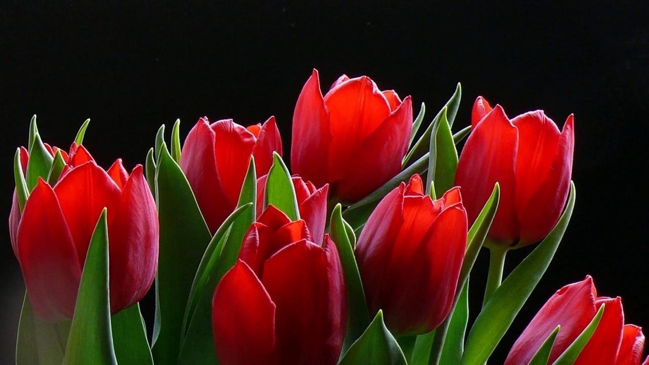 26 июн 2017. Своевременная выкопка и правильное хранение луковиц тюльпанов – залог красивого и здорового весеннего цветника в следующем году. О тонкостях этих важных мероприятий порталу interfax. By рассказала научный сотрудник центрального ботанического сада нан беларуси ольга.