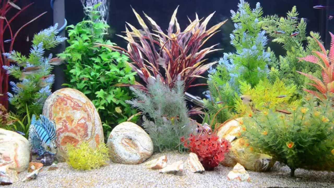 Aquarium Screensaver Tropical Fish Tank