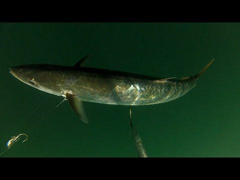 Greater Jacksonville Kingfish Tournament Media Day 2015
