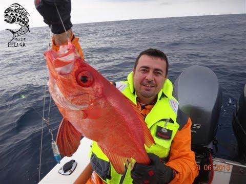 Pescaria Em Alto Mar De LÍRIO, OLHO DE CÃO E NAMORADO - Equipe Beluga Rato&Cia