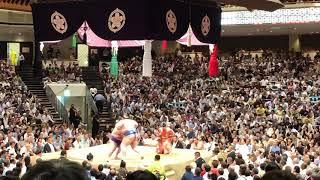 Japanese Sumo Tournament: Wrestling in Tokyo, Japan. (Lynn Julian, Travel Vlogger, Influencer, Vlog)
