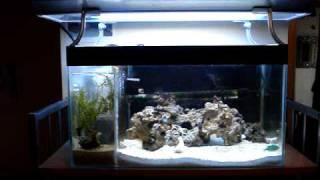 reef tank diy 4 gallon refuguim