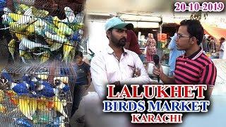Lalukhet Sunday birds Market 20-10-19 Latest Updates (Jamshed Asmi Informative Channel)  Urdu/Hindi