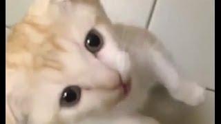 Приколы с животными / ★