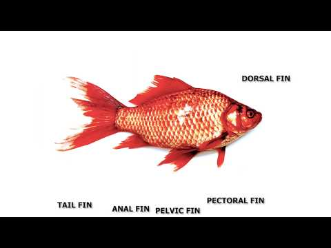 Adaptation In Fish