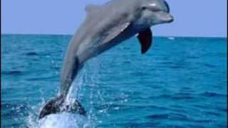 Delfini Delfinaki - Yiannis Kalantzis