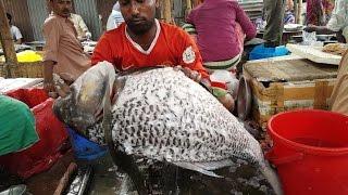 Incredible Big Catla Fish Cutting | Huge Size Indian Major Carp Fish Slice 2017