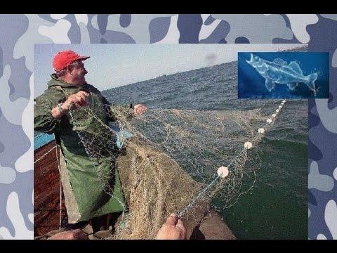 ловля бычка на азовском море форум
