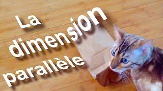 LA DIMENSION PARALLÈLE - PAROLE DE CHAT